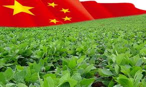 china soja